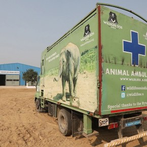 "Wildlife SOS India's First Elephant Hospital Sets Precedent as Their Rescued, Former Captive,  Asian Elephant Patients Can Now Experience ""Healing With Compassion"""