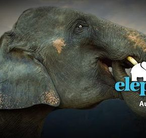 "Celebrate World Elephant Day 12 August 2019 : What Can We Do to Help Elephants in 2019? Promise to Become More ""Aware of Elephant Habitat"""