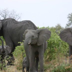 Video Moment : Baby Elephant Meets Elephant Clans  The Long Walk Home  BBC Earth  Part 6