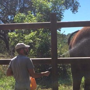 Elephant Expert Shares His Amazing Story of His Life With Captive Elephants, His Appalling Discovery of the Mistreatment of Those Elephants and His Vow to Provide Sanctuary & Healing For Captive & Performing Elephants Worldwide : Part 3