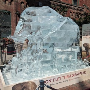 Elephant Spoken Here Turns Five With a Look Back at the #DontLetThemDisappear Campaign's Elephant Ice Sculpture in Manhattan