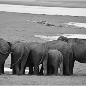 If Humans Were More Like Elephants… #BehaveMoreElephant, Wisdom from Elephants to Carry Us Through Life