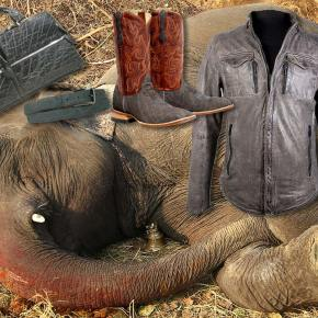 Urgent Petition to Help Elephants: Stop the International Trade in Elephant Skins