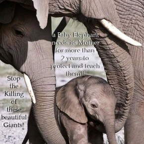 Mamas Are So Important to Us & Elephants – Happy Mothers Day!