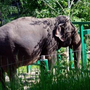 Countdown to World Elephant Day 2021 With Lucy-Centric Elevents For Our Lucy the Elephant in Canada
