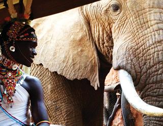 Elephant Watch Camp, activities, game drives, elephants, wild safaris, wildlife safaris, Big Five animals, conservation, Samburu National Reserve, Elephant Watch Portfolio, Nairobi, Kenya