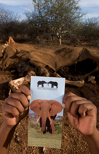 Elephant Watch Camp, Samburu National Reserve, conservation, action, conservation in action, Big Five, Big Five animals, wild safaris, wildlife safaris, Elephant Watch Portfolio, Nairobi, Kenya