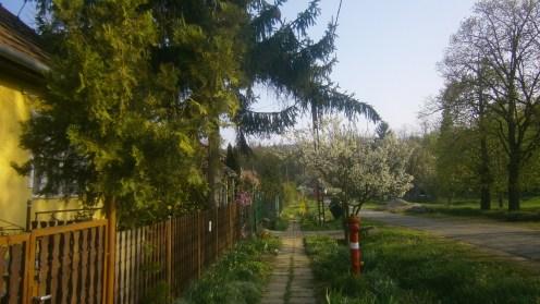 Utcakép tavasszal