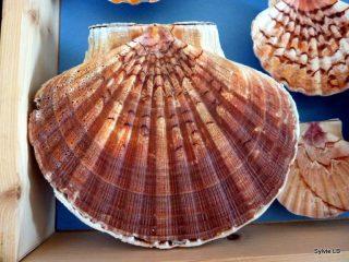 Utazás lakóautóval Montpellier - Sete, shell kagyló, az El Camino zarándokút jelképe