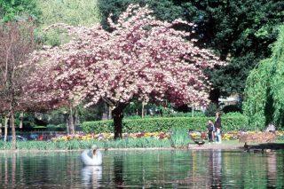 Toulouse lakóautóval - Jardin Royal