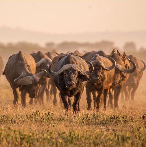 Úti célok 2018 - Lonely Planet Top 10 - Dél-Afrika