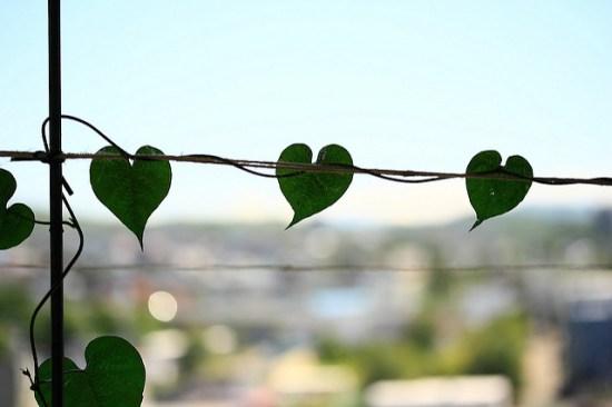 Evangelio apc Hojas de Corazón