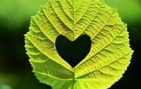 Evangelio apc Corazón en hoja portada