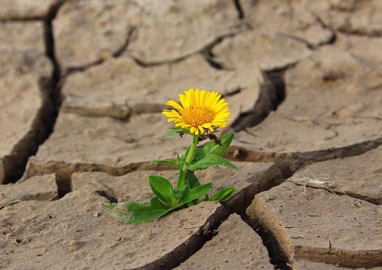Evangelio apc Flor sequía
