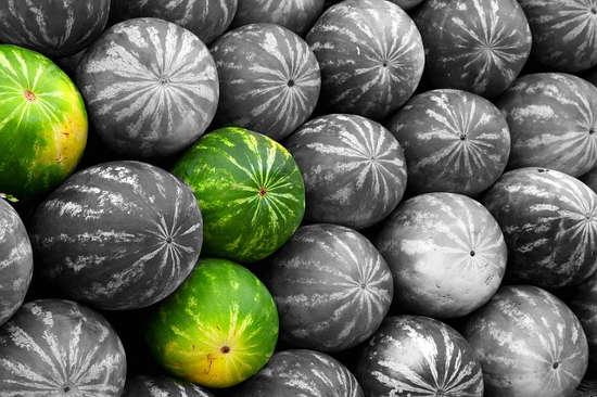 Evangelio apc Melones
