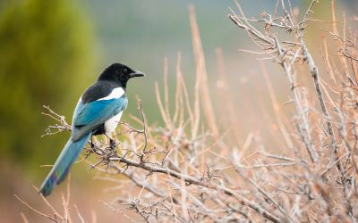 Feed The Magpies With Content, Not Foil