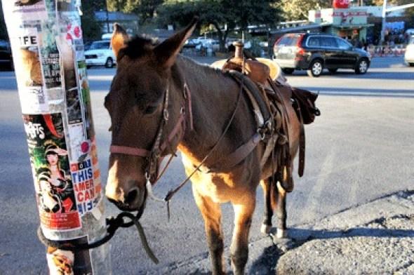 austin horse on south congress