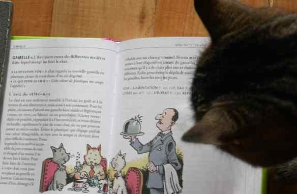 livre pour mieux comprendre son chat
