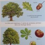 livre enfant sur les arbres