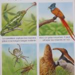 livres pour enfants sur animaux des étangs