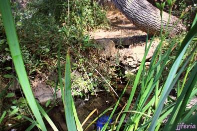 Fuente de Fontefrida al pie de las ruinas del castillo de Rochafrida oculta entre la vegetación.