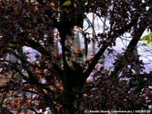 Blumenelfe in grauem Kapuzen-Umhang mit Korb