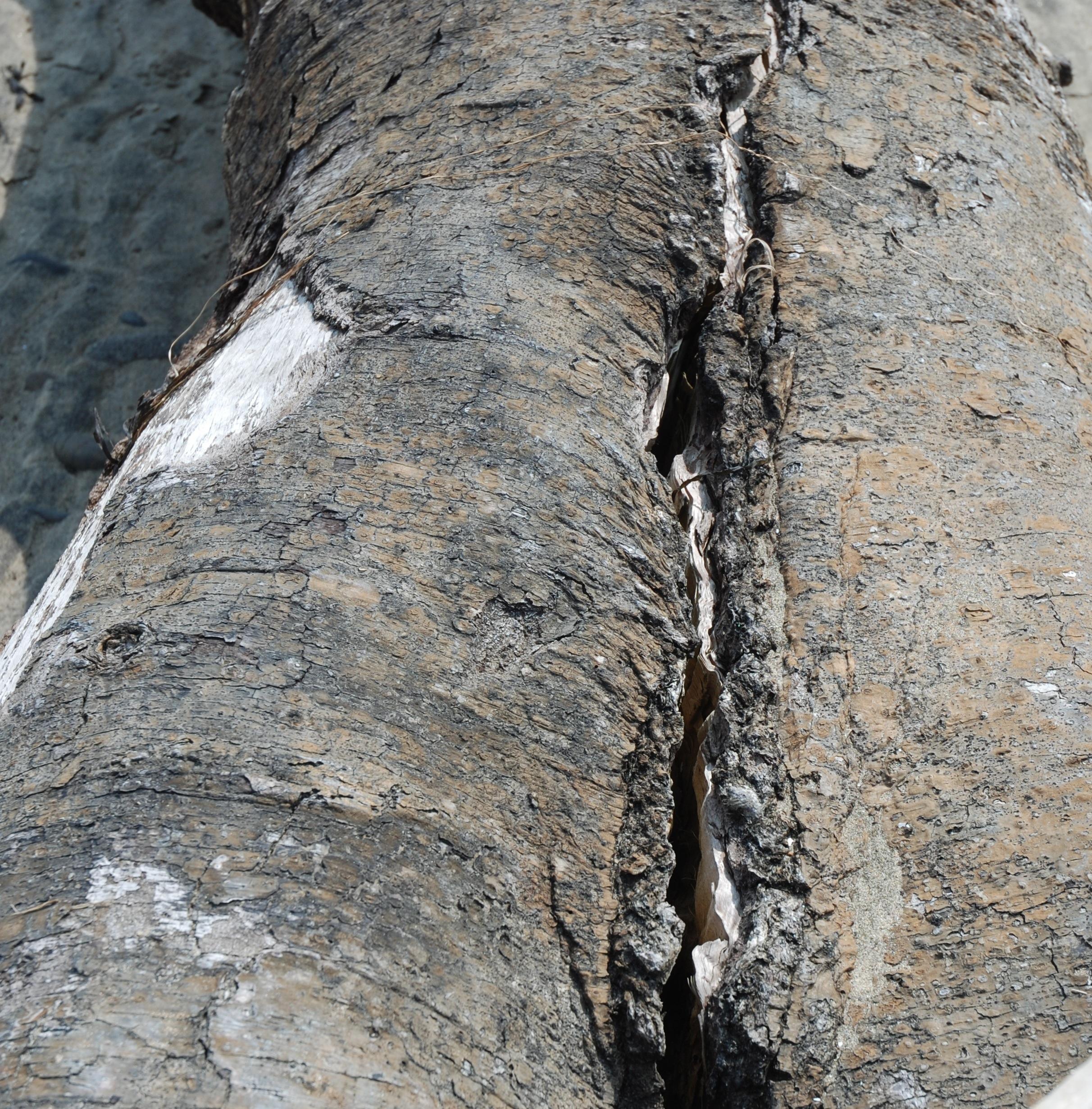 treecrack