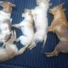 Localizan perros envenados en Arandas