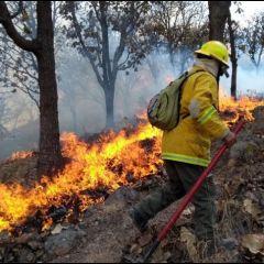Dificultan combate a los incendios forestales tras recortar 1,200 mdp