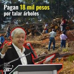 Pagan 18 mil pesos al mes por talar árboles