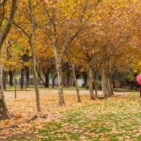 Cuando el otoño era otoño