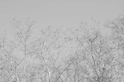 Paseo por el parque, Madrid, enero de 2015. Fotógrafo: Daniel Ramos.