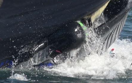 Un buzo es tragado por una ballena y es escupido vivo