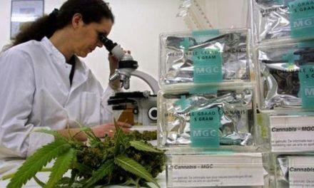 Se oponen a cumbre sobre uso marihuana medicinal