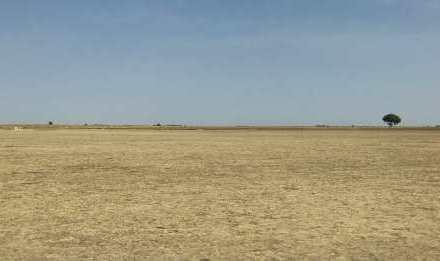 Unos 24.000 millones de toneladas de suelo fértil se pierden cada año por la desertificación