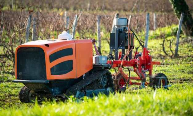 Láser para eliminar malas hierbas de los cultivos sin necesidad de pesticidas