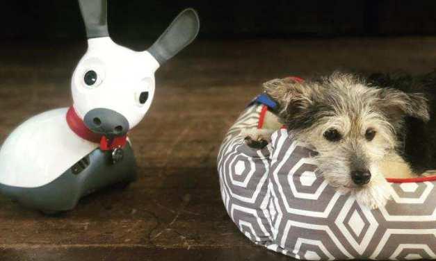 ¿Reemplazar perros de terapia por robots?