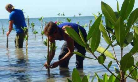 Un proyecto de medio ambiente protegerá la costa sur de Cuba frente al cambio climático