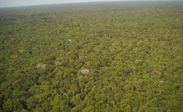 La Amazonía perdió 2,3 millones de hectáreas en 2020