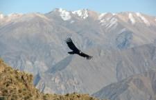 Postales de Arequipa