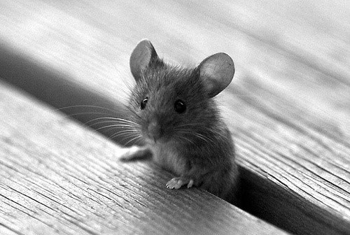 Image result for cute mouse