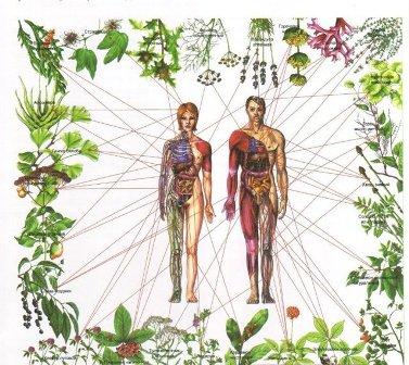 plantasparaloschakrasFILEminimizer