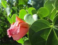 flor-cerrada