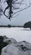 Dehesa nevada