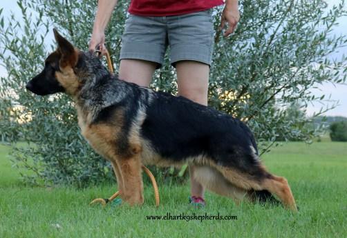 Archer 4.5 months