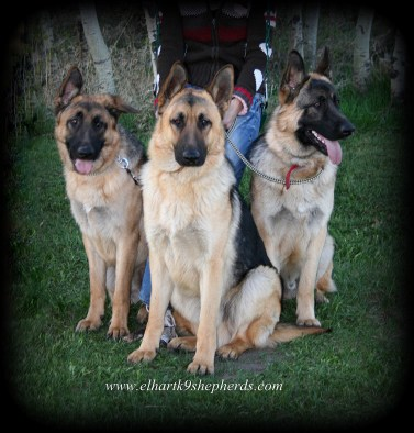 (Left to right) Archie, Arie, and Daks