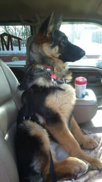 Beckett in the truck