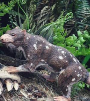 Descubren un nuevo mamífero de 72 millones de años de antigüedad