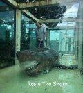 Hallan cadáver de un tiburón blanco en un acuario abandonado