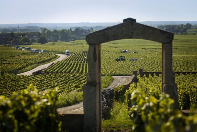 """Village de la Cote de Beaune : porte d'entree de la parcelle """"Ch"""